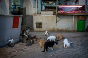 Gato (1) (1)